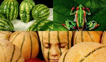 20 Body Paintings That Camouflaged Perfectly