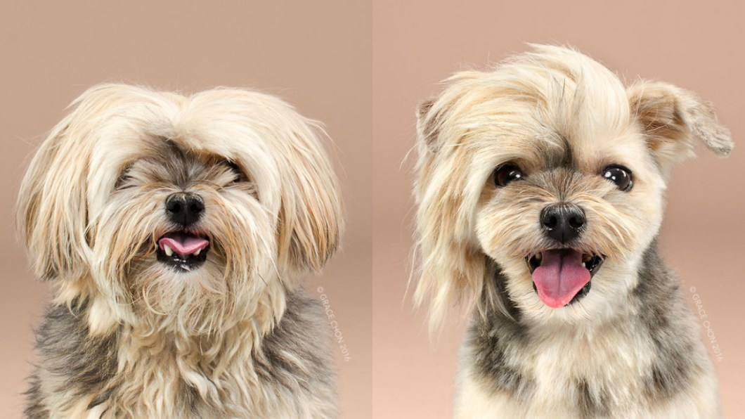 Doggies Before And After Their Haircut_002