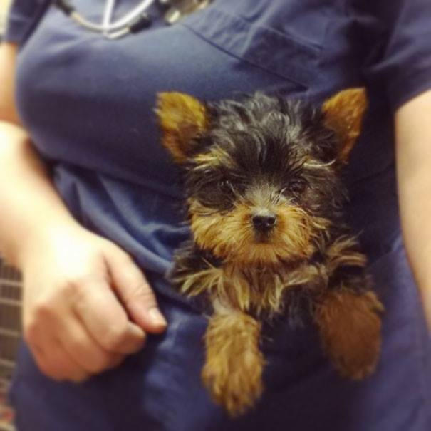 These Pictures Will Make You Want To Work At An Animal Hospital21