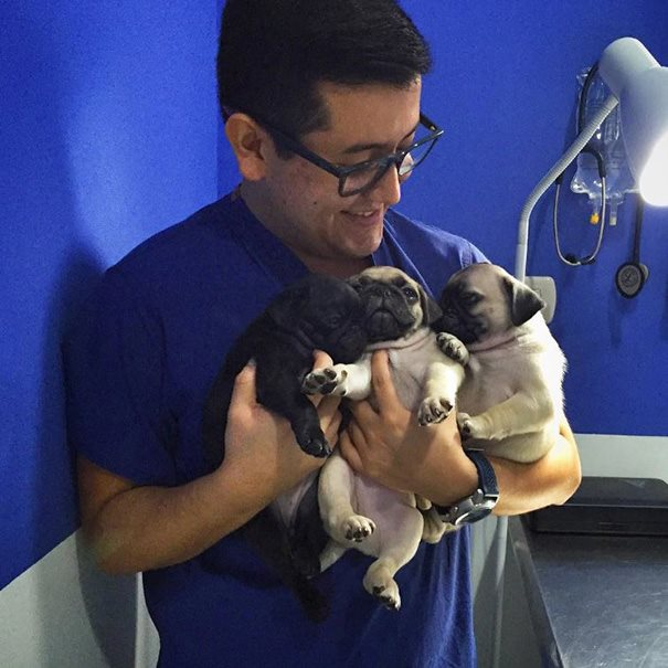 These Pictures Will Make You Want To Work At An Animal Hospital24