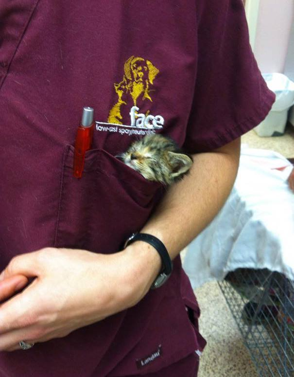 These Pictures Will Make You Want To Work At An Animal Hospital27