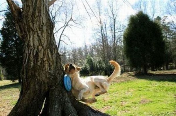 26 Epic Dogs Fails That Are Bound To Make You Fall Off Your Chair (7)