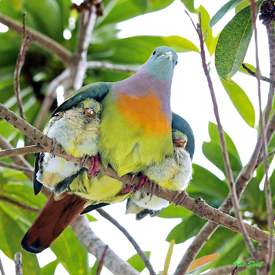 Animal Parents With Their Animal Babies_003