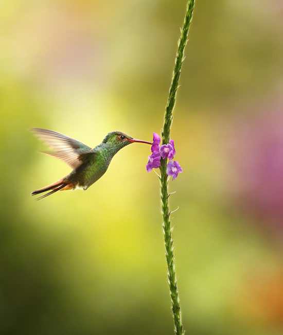 Beautiful Images That Prove Nature Is The Best Gift  (11)