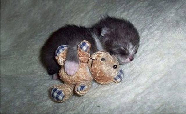 Kittens Who Are Asleep And Hilarious At The Same Time! (13)
