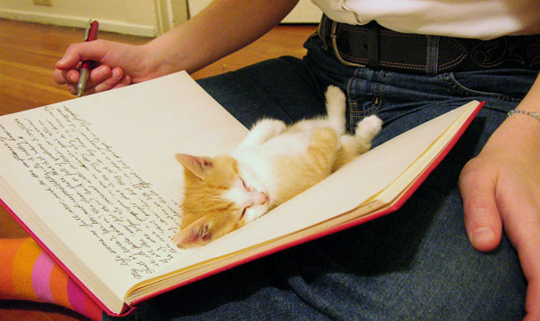 Kittens Who Are Asleep And Hilarious At The Same Time! (15)