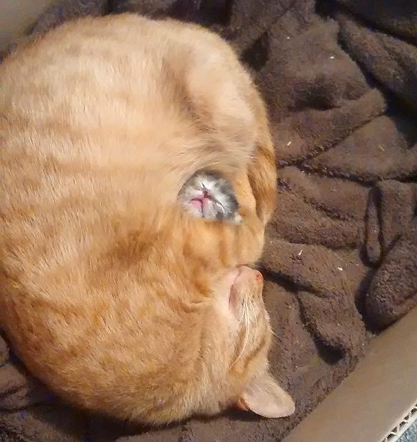 Kittens Who Are Asleep And Hilarious At The Same Time! (2)