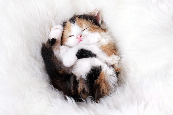 Kittens Who Are Asleep And Hilarious At The Same Time! (3)