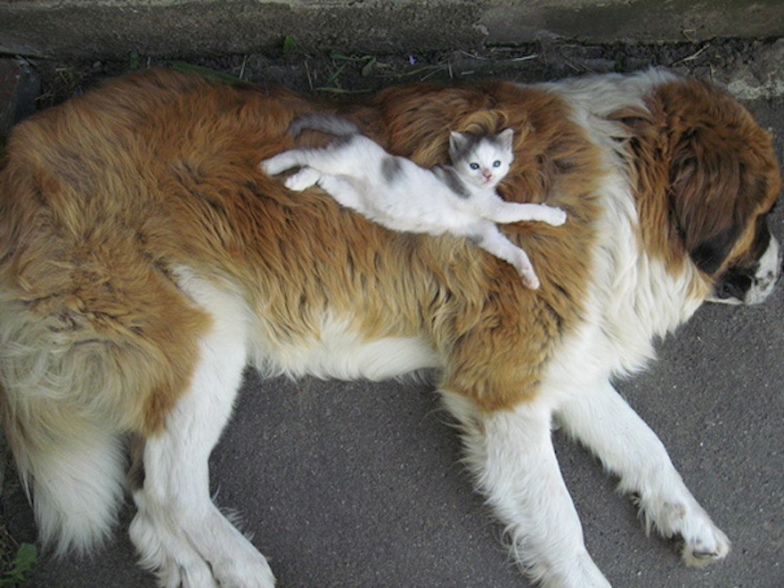 Pictures That Prove Cats And Dogs Are Actually Friends 15