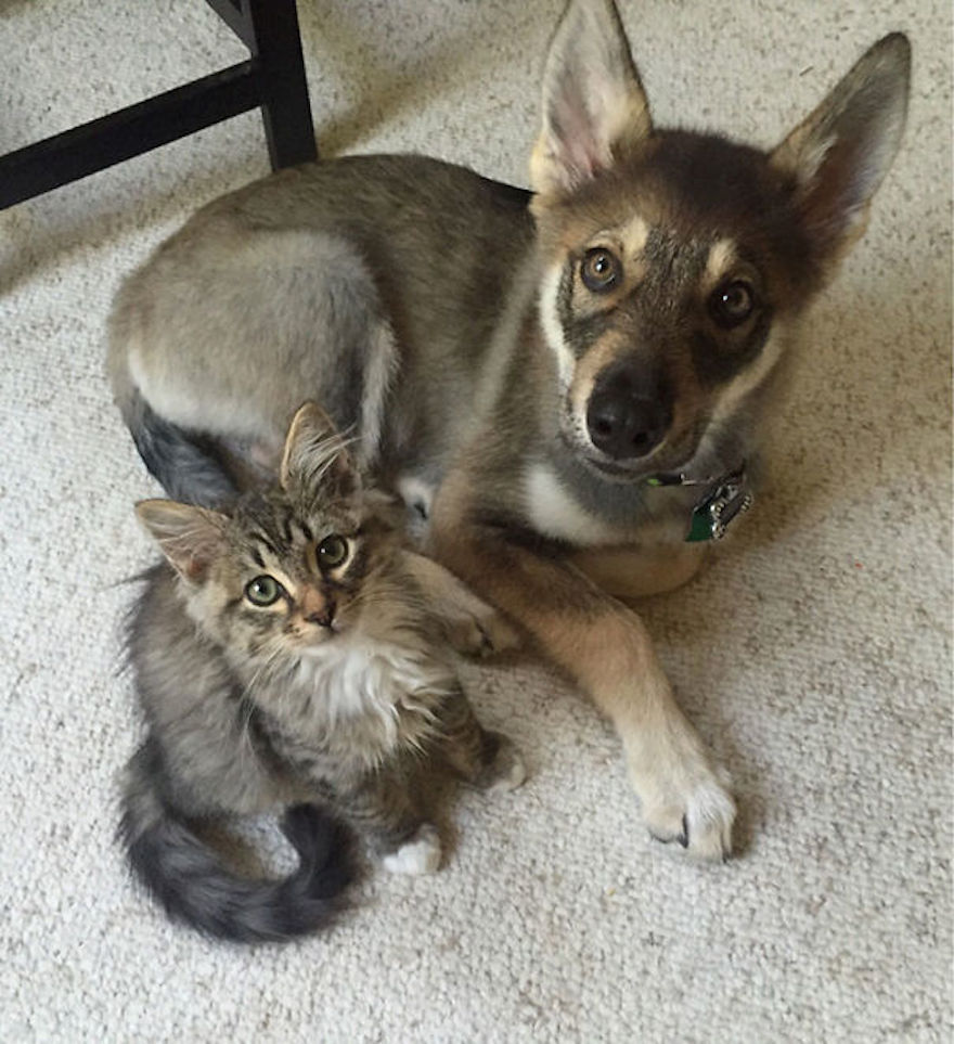 Pictures That Prove Cats And Dogs Are Actually Friends 16