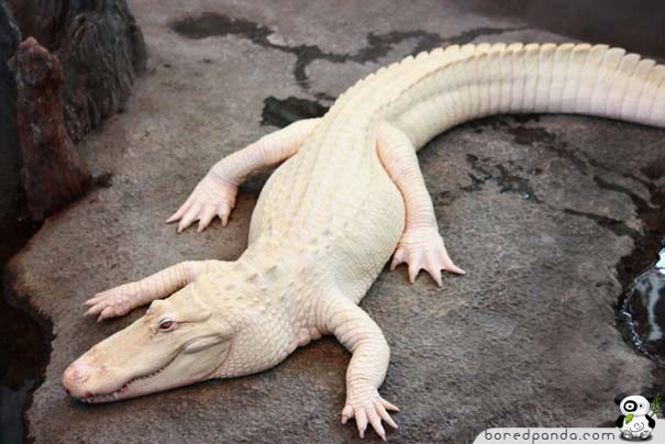 These 26 Albino Animals Don't Need Color To Prove Themselves (5)