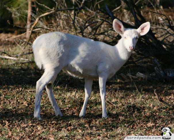 These 26 Albino Animals Don't Need Color To Prove Themselves (6)