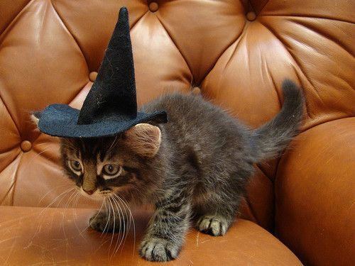 10-pet-costume-ideas-for-halloween-10