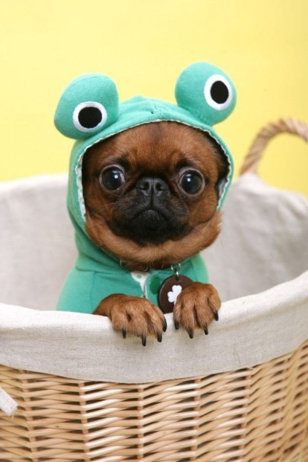 10-pet-costume-ideas-for-halloween-2