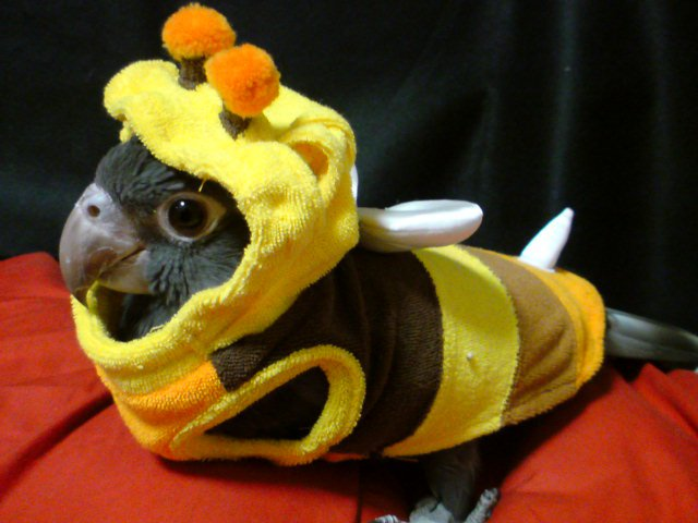 10-pet-costume-ideas-for-halloween-6