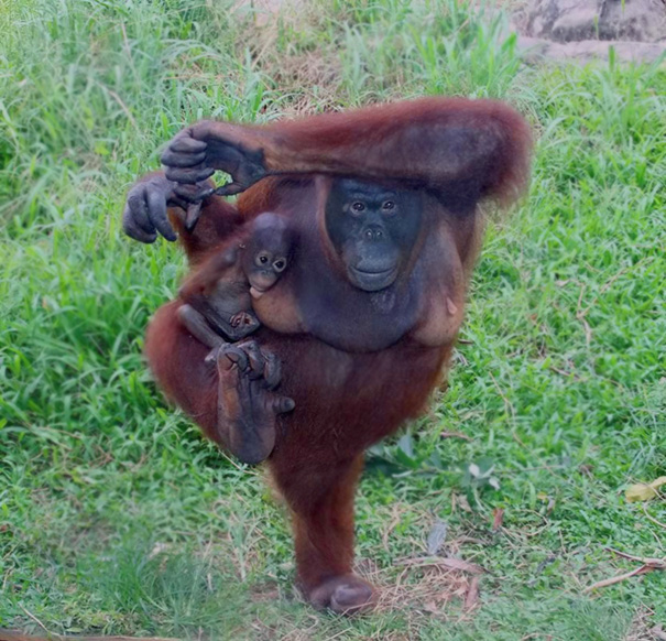 15 Animals Who Are Here To Give You Some Yoga Goals (10)