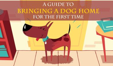 Things To Keep In Mind While Becoming A Pet Parent