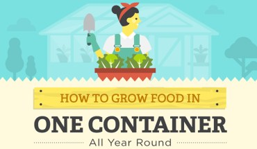 Your Ultimate Guide To Gardening - Infographic