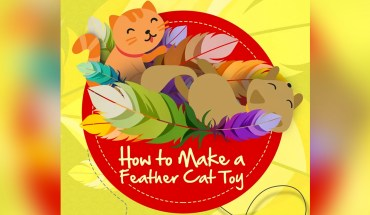 DIY Effective Feather Toy For Your Cat - Infographic