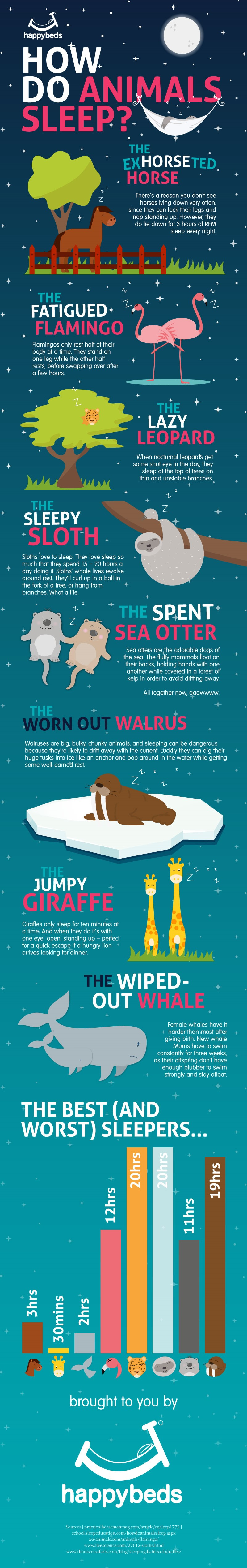 Sleeping Patterns Of Animals - Infographic