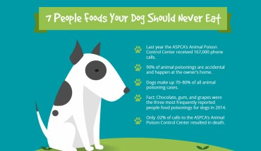 7 Human Foods That Can Be Poison for Dogs - Infographic