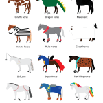 How Horses Celebrate Halloween Infographic