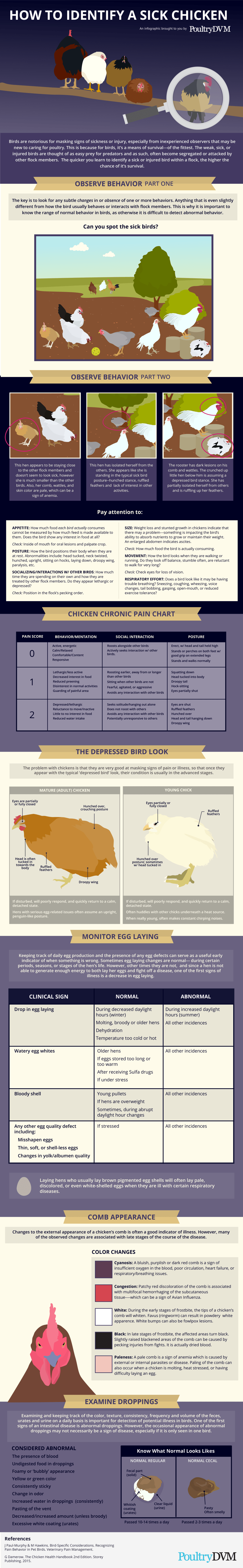 Signs that Identify a Sick Chicken - Infographic