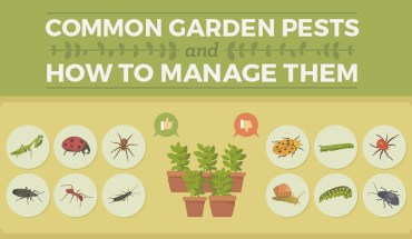 Common Garden Pests: The Problem and the Solution - Infographic