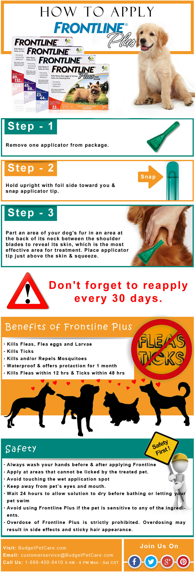 No More Fleas and Ticks: Apply Frontline Plus on Dogs - Infographic