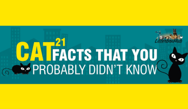 All About Cats: 21 Amazing and Fun Facts - Infographic