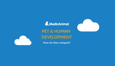 Similarities and Differences: Development Needs of Pets and Humans - Infographic