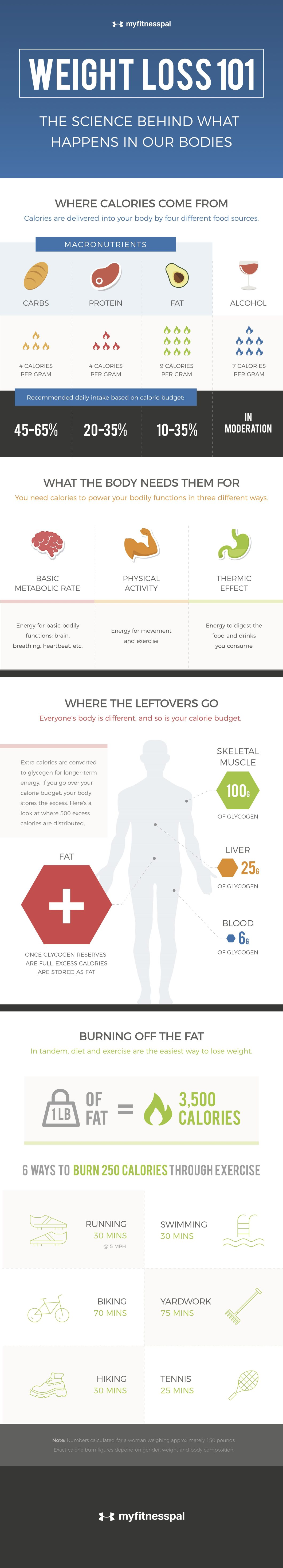 The Science of Weight Loss: What Calories Do Inside You - Infographic