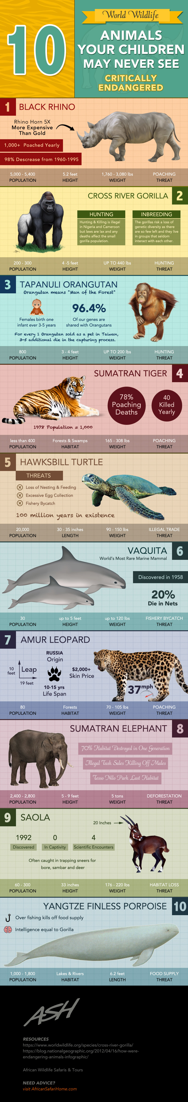 10 Endangered Creatures Our Next Generation May Not See - Infographic
