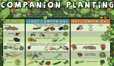 Comprehensive Guide to Ideal Plant Partnerships - Infographic