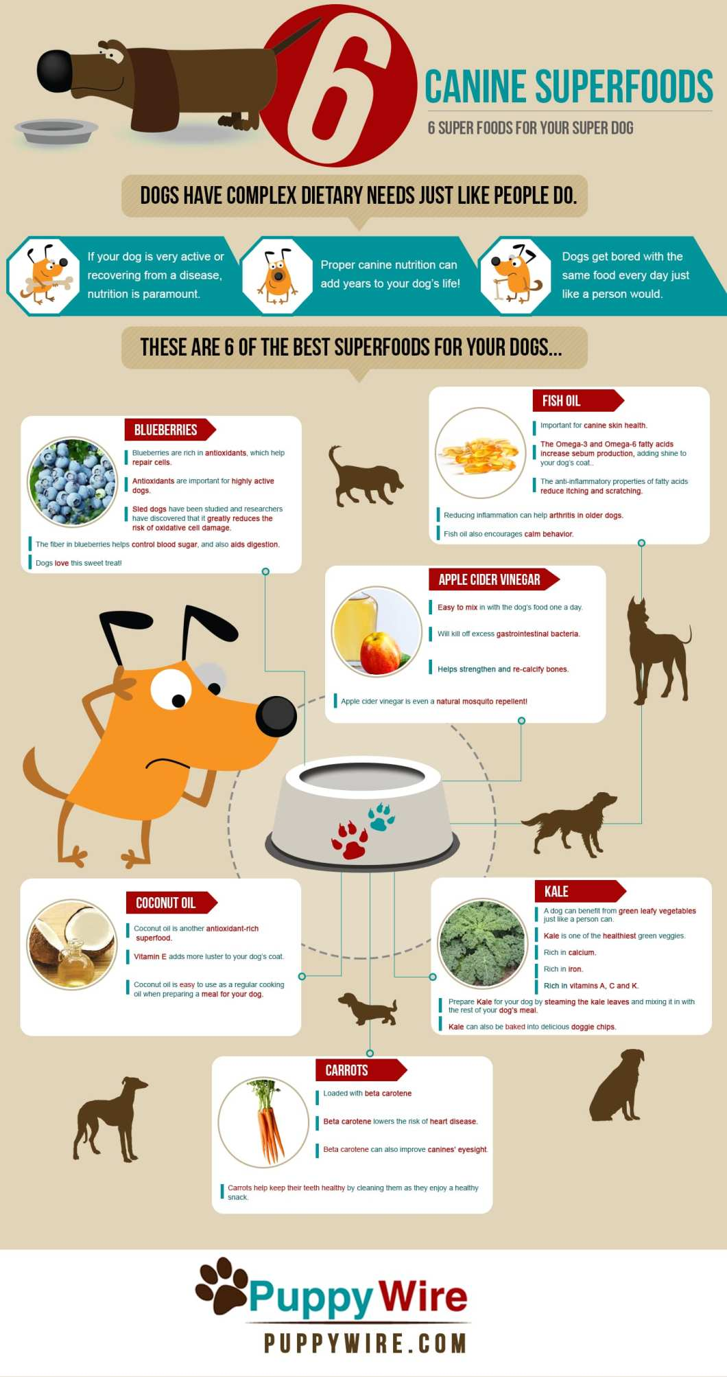 6 Nutrient-Rich Superfoods that Boost Your Dog's Health - Infographic