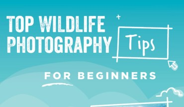 Practice Make Perfect: Wildlife Photography Tips for Beginners - Infographic