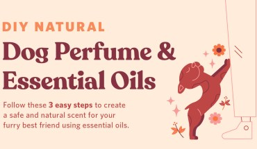 DIY Natural: Dog Perfume & Essential Oils - Infographic