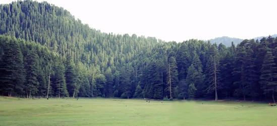 Nature forest background free photo Graphics Pic