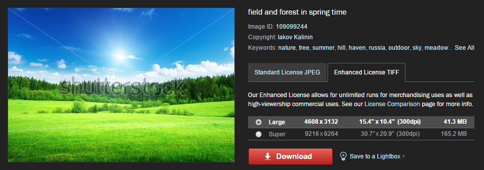Viewing Shutterstock's image licensing options.
