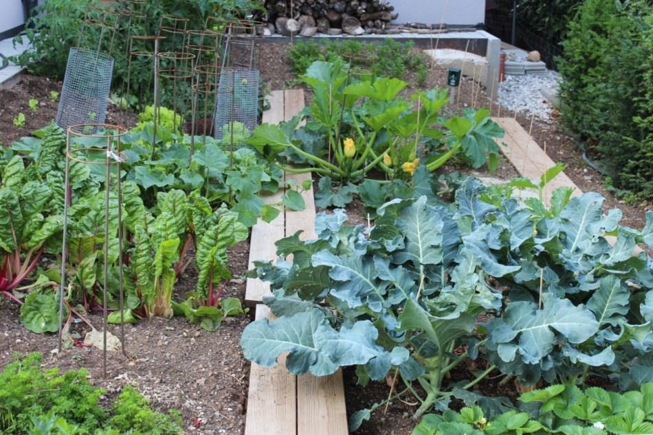 (c) Grashüpfer, Gemüsebeet, Gemüseernte