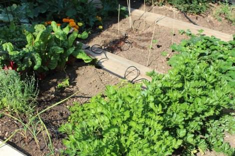 (c) Grashüpfer, Bewässerungssystem