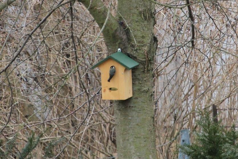 Vogelfreundlicher Garten: meise bei nistkasten