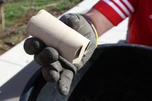 Sämlinge vereinzeln - WC-Papierrollen als Pflanzgefäß