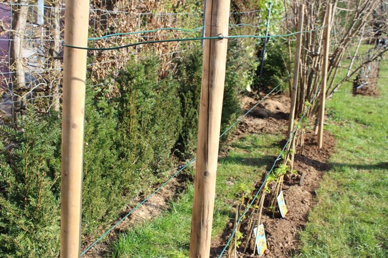 fertiges Rankgerüst für Naschgarten