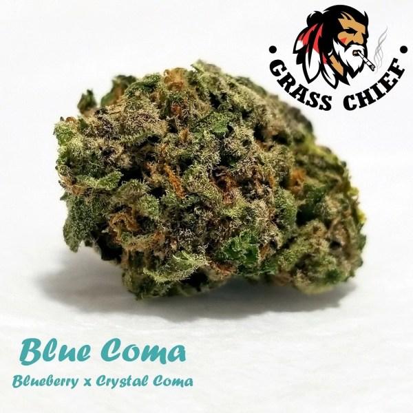 Blue Coma Grass Chief 1