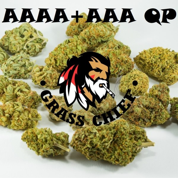 AAA-and-AAAA-QP-Grass-Chief