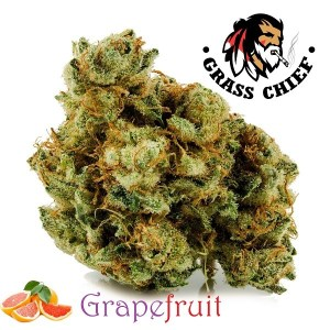 grapefruit 3 Grass Chief