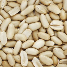Erdnüsse, Arachide