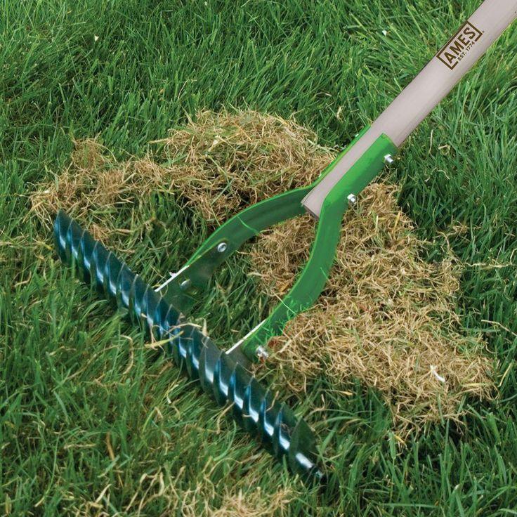 Should I Rake My Lawn