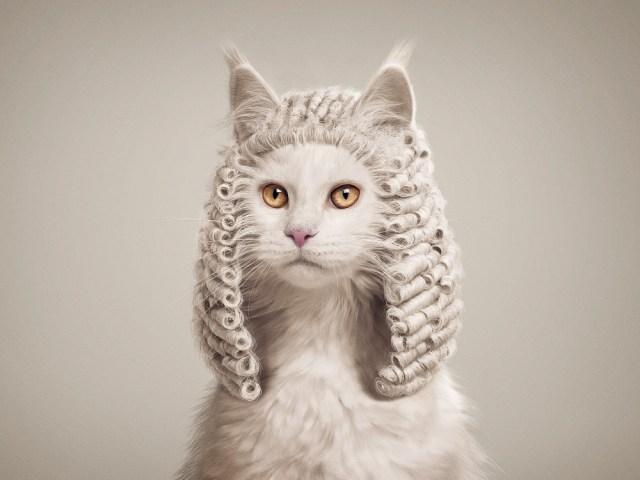 кот в парике